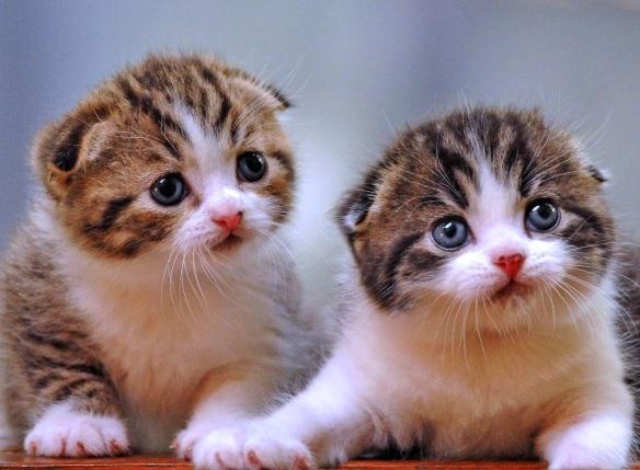 Klasifikasi Dan Fakta Ilmiah Kucing Dani Aulia